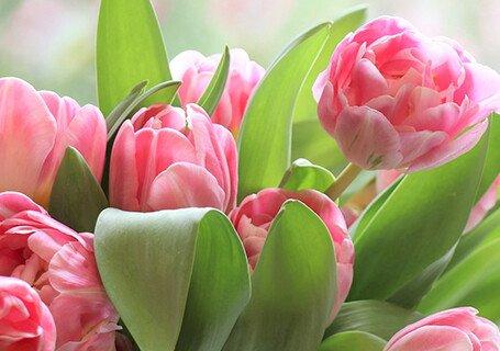 Группа компаний ТОНК поздравляет всех женщин с 8 марта!